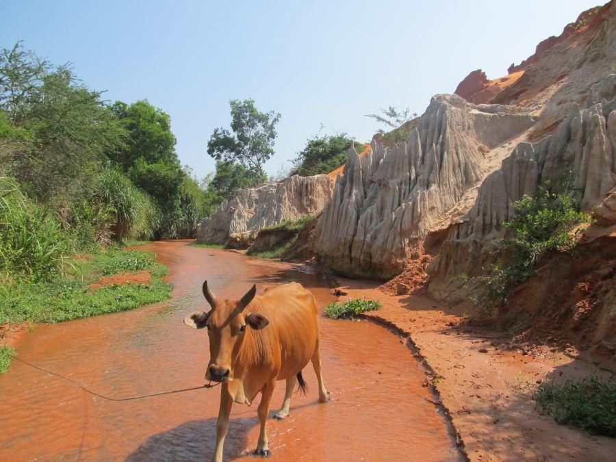 eine Kuh kreuzt den Weg
