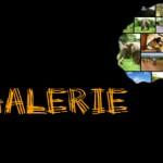 Safari Bildergalerie für Abenteurer und Tierliebhaber