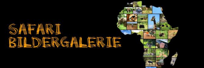 Safari Bildergalerie