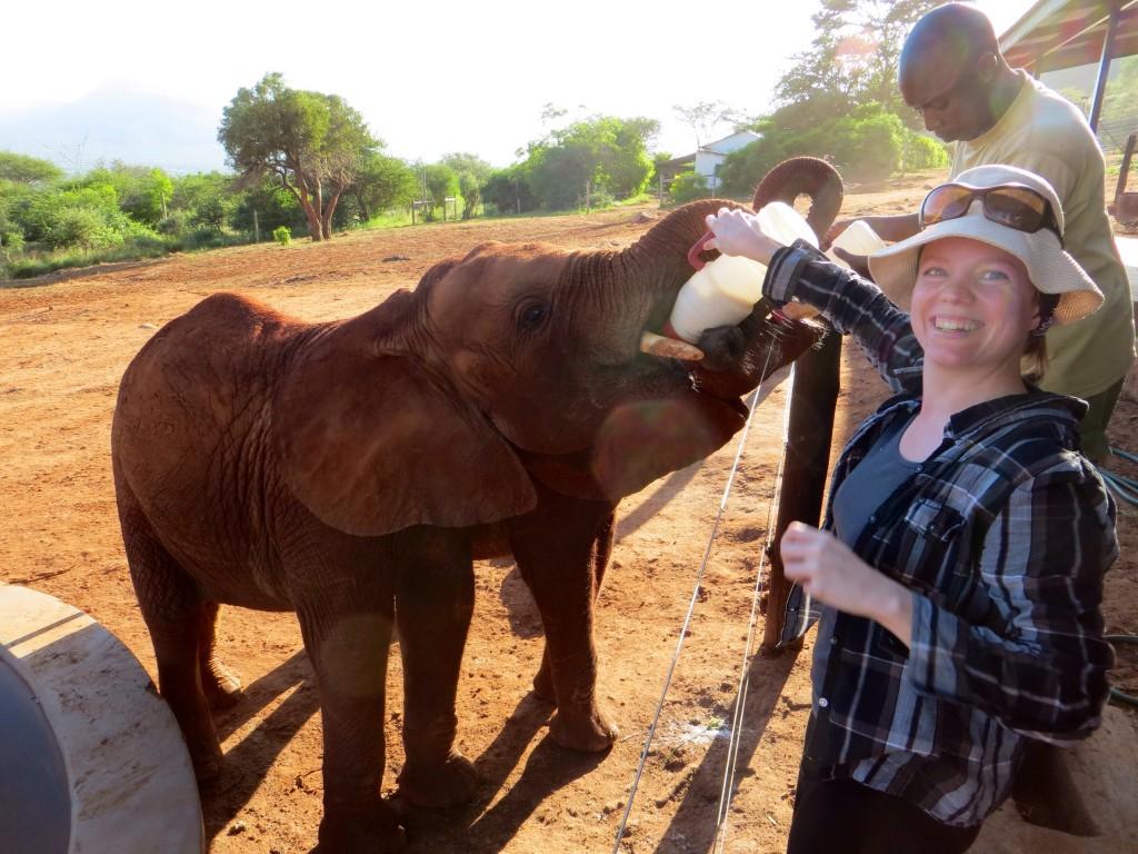 Elefanten füttern in Kenia