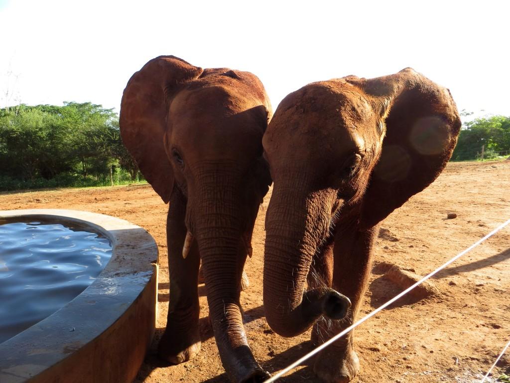 Elefanten hautnah erleben