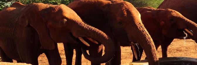 Elefanten adoptieren und besuchen