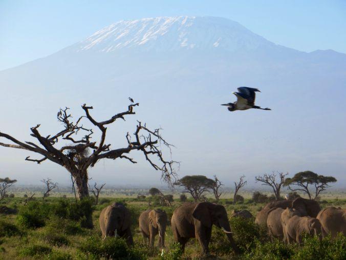 Als Paar auf Safari