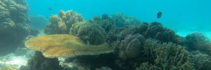 Die besten Schnorchelspots auf Bali