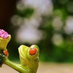Ideen für den Heiratsantrag