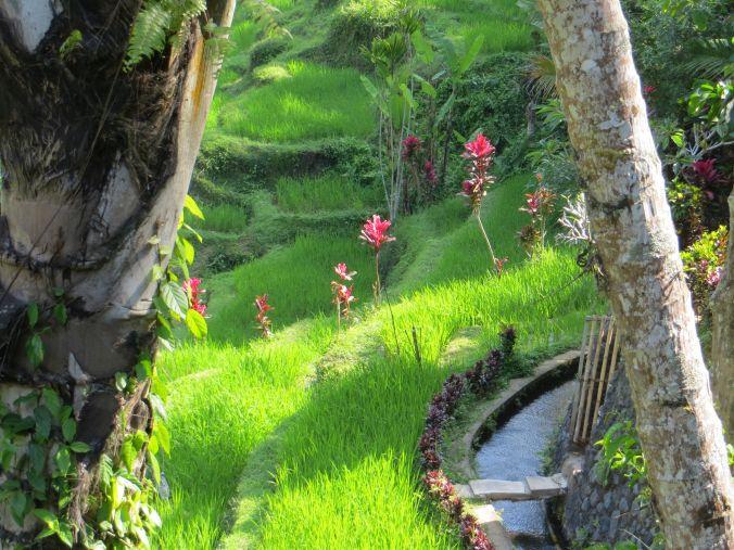 Ausblick Reisterrassen