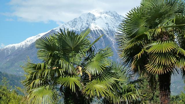 Berge und Palmen in Südtirol