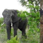 Routen im Krüger Nationalpark für Entdecker