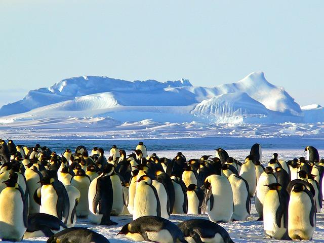 Flitterwochen in der Antarktis